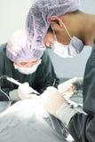 Twee veterinaire chirurgen in werkende ruimte Royalty-vrije Stock Afbeeldingen