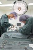 Twee veterinaire chirurgen in werkende ruimte Royalty-vrije Stock Foto