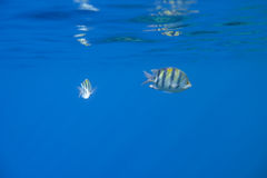 Twee Vissen Stock Fotografie