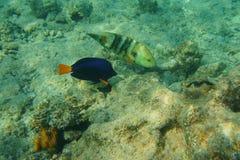 Twee vissen en jongen Stock Afbeeldingen