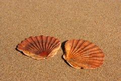 Twee vlakke overzeese shells op het zand Stock Foto