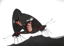 Twee vlinders Royalty-vrije Stock Fotografie
