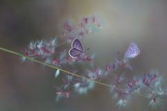 Twee vlinders het vliegen Stock Foto's