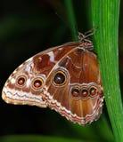 Twee vlinders op een tak royalty-vrije stock fotografie