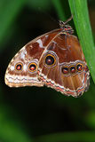 Twee vlinders op een tak stock afbeelding