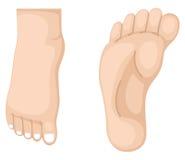 Twee voet vector Stock Foto