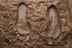Twee voetafdrukken op natte modder Royalty-vrije Stock Foto