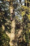 Twee vogelhuizen die op de boom hangen Royalty-vrije Stock Afbeeldingen