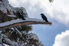 Twee Vogels stock foto's