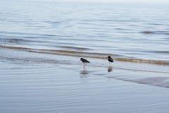 Twee Vogels Stock Fotografie