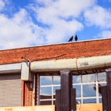 Twee Vogels bovenop een rood baksteengebouw Stock Foto