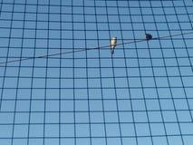 Twee vogels die elektrische lijn zitten stock foto