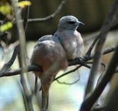 Twee vogels die samen op een tak zitten Stock Foto's
