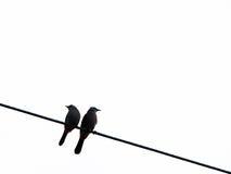 Twee vogels op de draad Stock Afbeelding