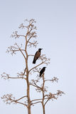 Twee vogels op lichtblauwe achtergrond Royalty-vrije Stock Afbeelding