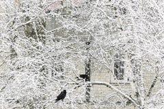 Twee vogels van kraai zitten op een sneeuwboom tegen de achtergrond van royalty-vrije stock afbeelding