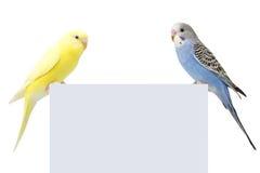 Twee vogels zijn op een witte achtergrond stock foto