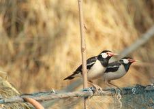 Twee vogelzitting en wachten stock afbeeldingen