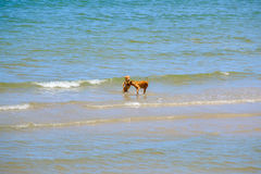 Twee vriendenhonden spelen in het overzees Royalty-vrije Stock Fotografie