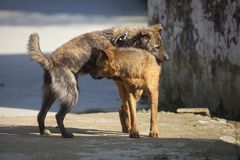 Twee vriendschappelijke honden Stock Afbeeldingen