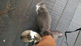 Twee vriendschappelijke straatkatten Royalty-vrije Stock Afbeeldingen