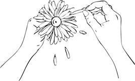 Twee vrouwelijke handen afgesneden bloemblaadjes op een groot madeliefje vector illustratie