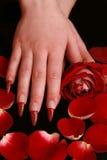 Twee vrouwelijke handen met een mooie manicure Stock Foto
