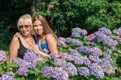 Twee vrouwen van verschillende generaties die zich dichtbij bloemenhydrangea hortensia's bevinden Moeder en dochter Grootmoeder e Royalty-vrije Stock Fotografie
