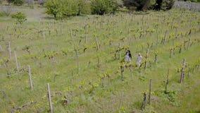 Twee vrouwen wandelen op druivenaanplanting in de zomerdag, satellietbeeld, het bekijken installaties en struiken stock footage
