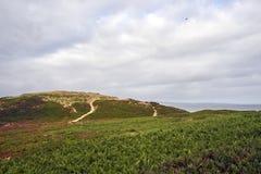 Twee wandelingswegen die over duinen en door borstel naar de vreedzame oceaan winden royalty-vrije stock foto's