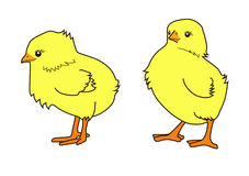 Twee weinig kip Stock Foto