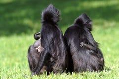 Twee wijfjes met welpen Twee mamma's met apen en peuters Mamma en het jonge geitje royalty-vrije stock afbeelding