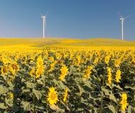 Twee windmolens in zonnebloemengebieden Stock Afbeeldingen