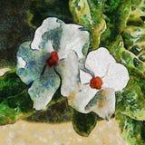 Twee Witte Bloemen Tekening imitatie Royalty-vrije Stock Afbeeldingen