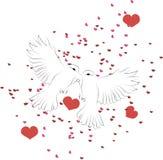 Twee witte duivenvlieg en kus Stock Foto's