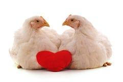 Twee witte kippen met een hart stock fotografie