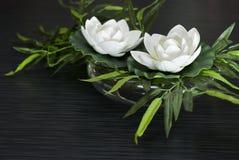 Twee Witte lotusbloembloemen Stock Afbeelding