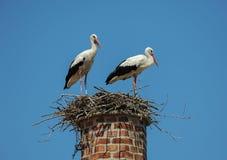 Twee witte ooievaars in een nest bovenop een schoorsteen Royalty-vrije Stock Fotografie