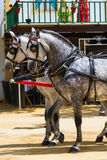Twee witte paarden met zwarte flarden stock fotografie