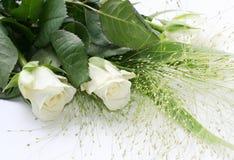 Twee witte rozen royalty-vrije stock foto