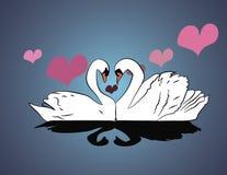 Twee witte zwanenkus op het meer stock illustratie
