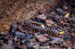Twee wormen in de grond Stock Afbeeldingen