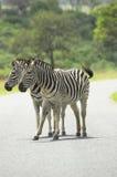 Twee Zebras Stock Foto's