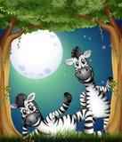 Twee zebras bij het bos Stock Afbeelding