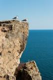 Twee zeemeeuwen die zich op een klip tegen het overzees bevinden stock foto