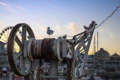 Twee zeemeeuwen door de haven op een kraan bij zonsondergang stock foto's