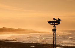 Twee zeemeeuwen op kolom bij zonsondergang Royalty-vrije Stock Foto's
