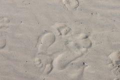 Twee zeer verschillende voetafdrukken in het zand bij het strand die in tegenovergestelde richtingen gaan - achtergrond stock afbeelding