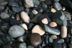 Twee zeeschelpen en kiezelstenen op een strand stock afbeelding
