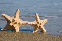 Twee zeesterren op het strand Stock Fotografie